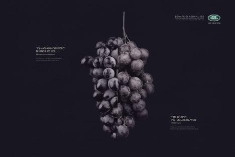 Grape copy