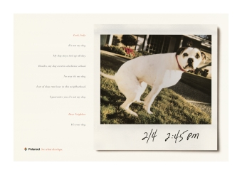 Polaroid_Dog